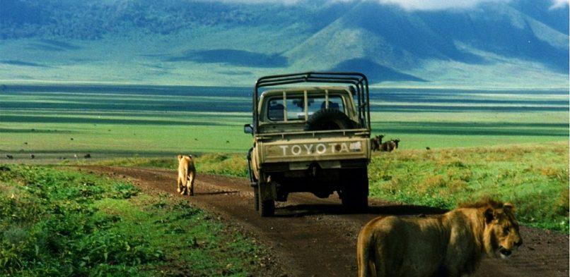 S'adonner au safari dans les plus belles destinations d'Afrique